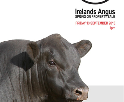 Irelands Angus - 2013 Catalogue artwork