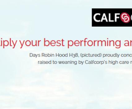 Calfcorp-beefweekftimage