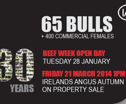 Irelands Angus - Web banner