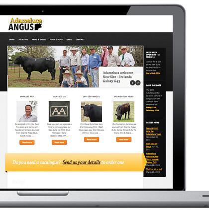 Adameluca Website