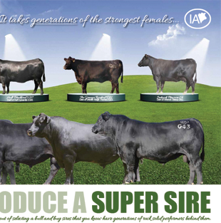 Irelands Angus 2015 Campaigns
