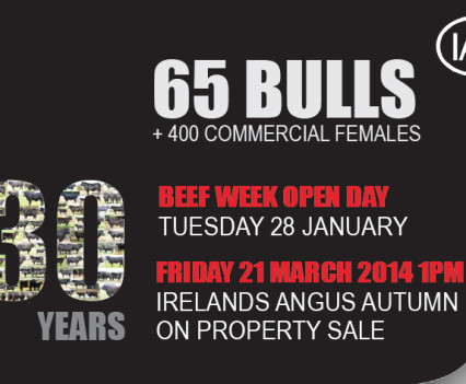 Irelands Angus - Web banner
