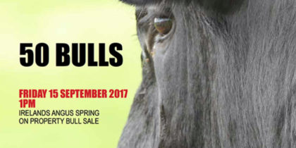 Irelands Angus 2017 marketing campaigns